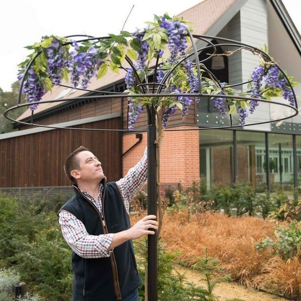 Wisteria Umbrella Plant Support Harrod Horticultural In 2020 Plant Supports Plants Garden Vines