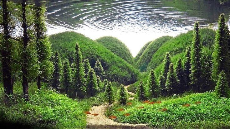 Top 10 Best Examples of Aquascaping | Aquarium landscape ...
