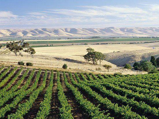 The stunning McLaren Vale, South Australia | www.foxcreekwines.com