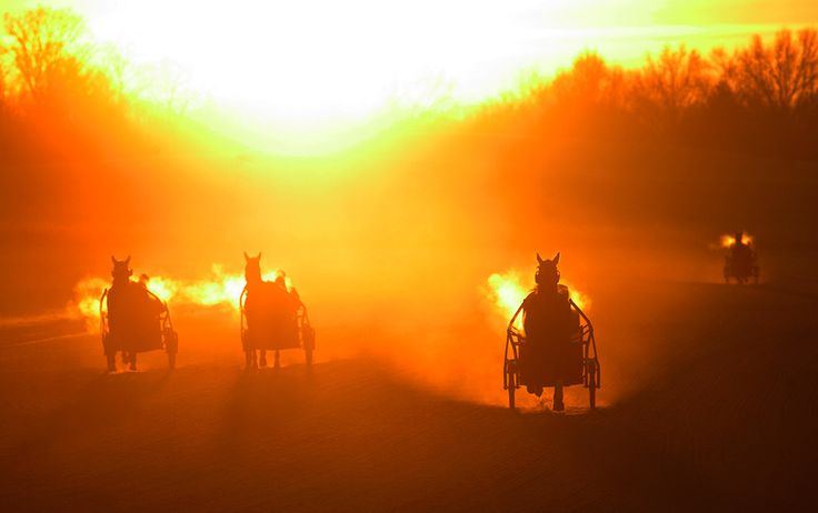 Harness racing at dawn. Now, think about this..if they are out on the track at the break of dawn, how early do the grooms get to the stables??  Try two hours before!