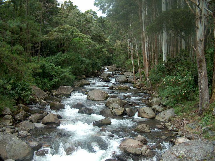 Bajo Mono Boquete, Provincia de Chiriquí (Republic of Panama)