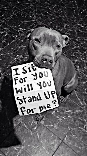 "I do not support it, I have dogs, a cat and other pets as well.  We are writing a petition to stop the ""Dog Meat Festival"" that is held on June 22nd in Yulin. We can make a difference with this. Please follow the link and sign the petition to stop Yulin! Change.org - https://www.change.org/p/mr-chen-wu-yulin-governor-please-shut-down-the-yulin-dog-meat-festival-in-guangxi-china"