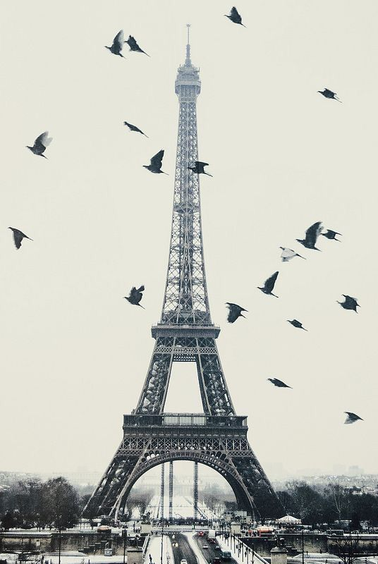 Paris Beautiful - Eiffel Tower