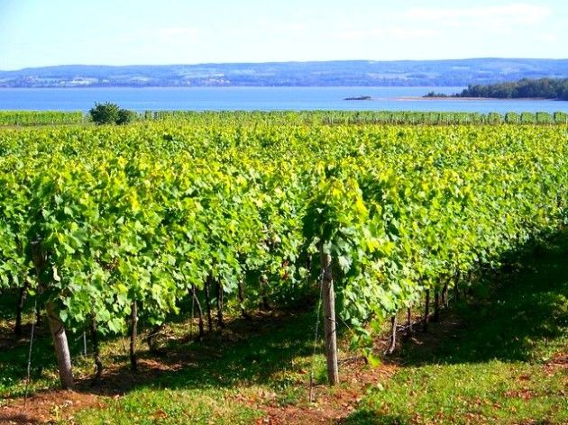The Nova Scotia Fall Wine Festival offers you the opportunity to sample NS wines at a wide array of events. Don't forget to try Tidal Bay!