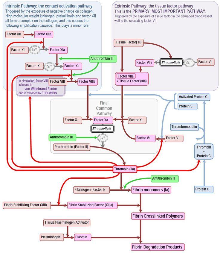 valtrex vs famvir