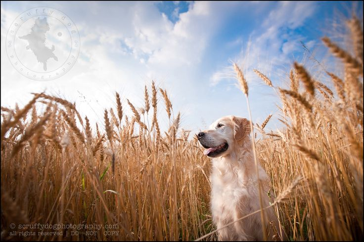 and still more dogs » scruffy dog photography | best professional pet photographer blog serving Toronto and Ontario
