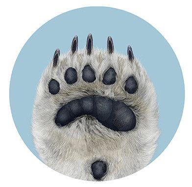 Polar Bear Paw Illustration  (Polygone Studio, 2011)