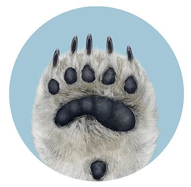 25+ best ideas about Polar Bear Paw on Pinterest | Polar bear food ...