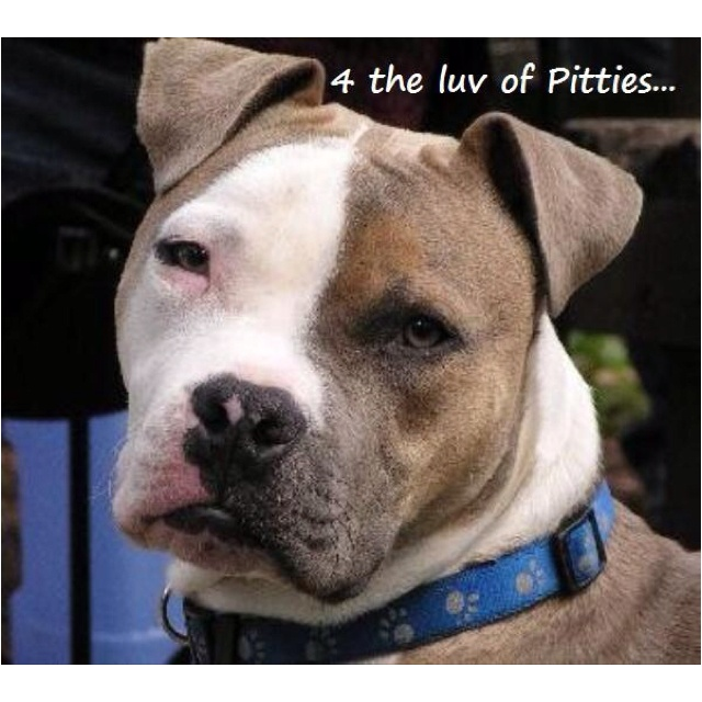 Handsome Pitty. <3: French Bulldogs, Boxers Dogs, Dogs American, Dogs Signs, Biddi Crafts, Dogs Dobermans, Handsome Pitti, Beautiful Dogs, Furry Friends