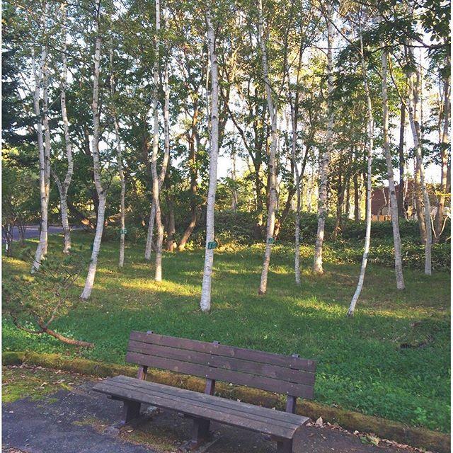 【hiro_nonnon】さんのInstagramをピンしています。 《・ ・ #函館 #市民の森 ・ ・ ・ こっそりデートするには  もってこいな場所♡*° ・ ・ このベンチに座って  happy な気分で過ごしたんだろな゚・*:.。❁ ・ ・ 人目につくと 恥ずかしい  初々しい  中学生カップルがお似合いだね♡*° ・ ・ ・ #ベンチ  #森  #森林  #森林公園  #木  #tree  #instatree  #instapic  #日々  #お散歩  #散歩  #風景》