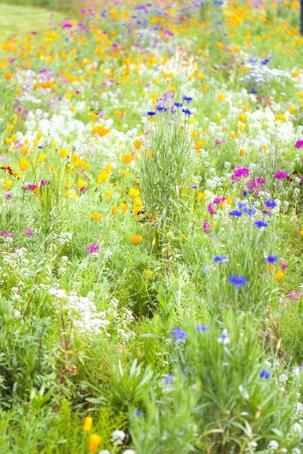 腸内フローラはお腹の中の花畑!?~1,000種類の常在菌と共に健康生活!~ LOHASCLUB