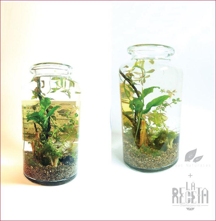Vegetación.