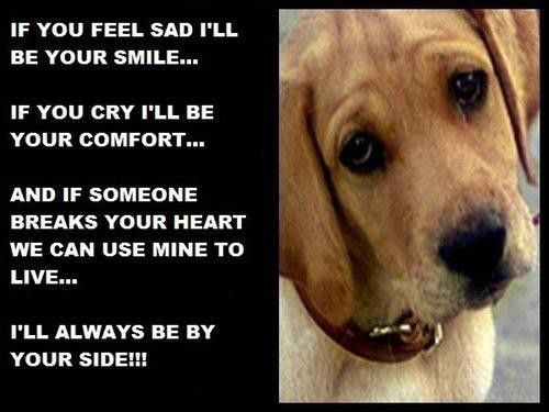 sad pet quotes