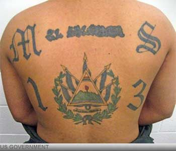 Criminal Tattoo: MS 13. The MS 13 on this man's back stands for Mara Salvatrucha, a large Latino gang notorious for its ruthlessness and violence. MS 13 originated in Los Angeles, but now operates across the United States as well as in Mexico, Central America and Canada. In addition to markings on the body, MS 13 members often sport intricate face tattoos.
