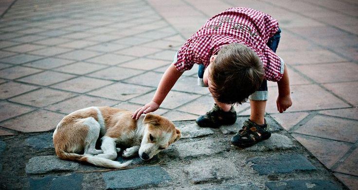 Aprende a rescatar a un perro de la calle. No sólo es agarrarlo, requiere de mucha atención, cuidado y sobretodo paciencia.   Aprende a hacerlo aquí: http://bit.ly/rescate_animal