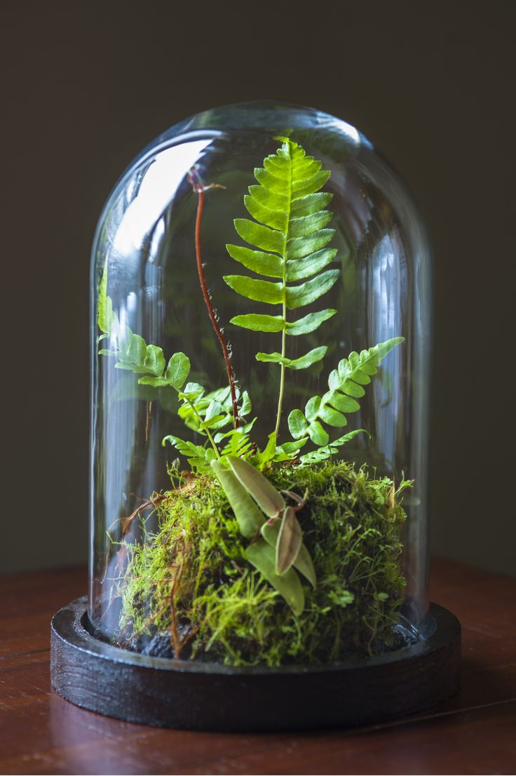 Handmade jungle by Tobias Davidson  Stolp in dutch or known as bell glass or terrarium.   I've been working for years to make the perfect selfsustaining micro biotope.  I've finally figured out what the best temparature, hydration and soil is. Plus I figured out a way to control mold in a moist environment.