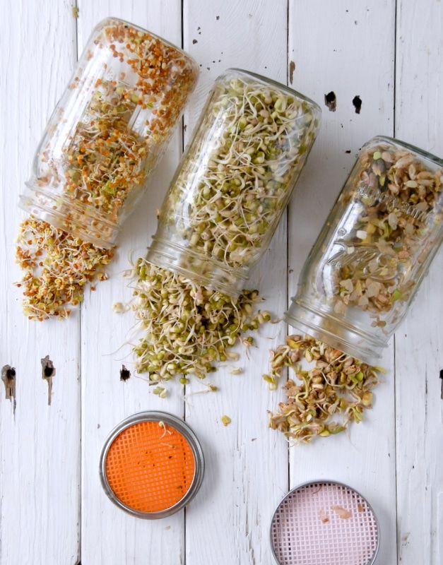 Homemade sprouts - BoulderLocavore.com