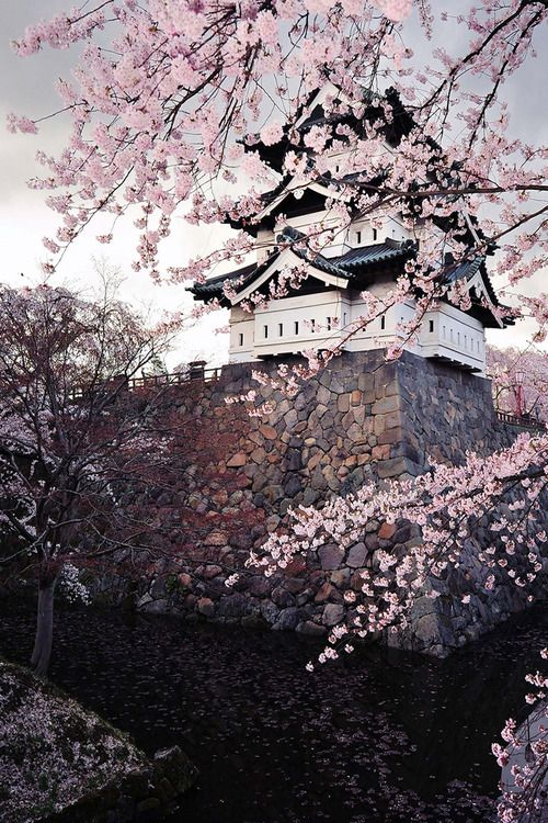 Hirosaki Castle in Spring. Japan (Hirosaki Castle before moving) http://blogs.wsj.com/japanrealtime/2015/09/03/heavy-lift-400-ton-historic-castle-in-japan-gets-moved/