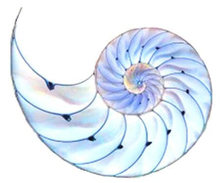 nautilus tattoo beautiful colors