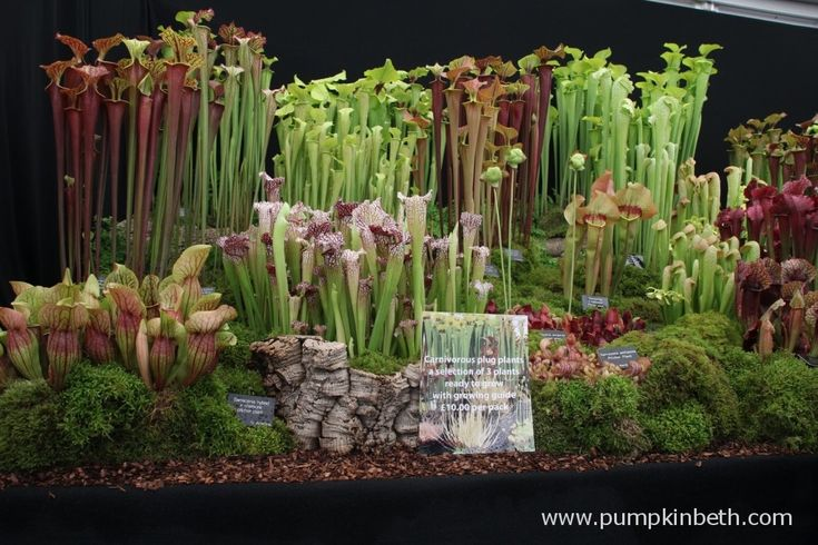 Hampshire Carnivorous Plants Gold Medal winning exhibit at the RHS Chelsea Flower Show.