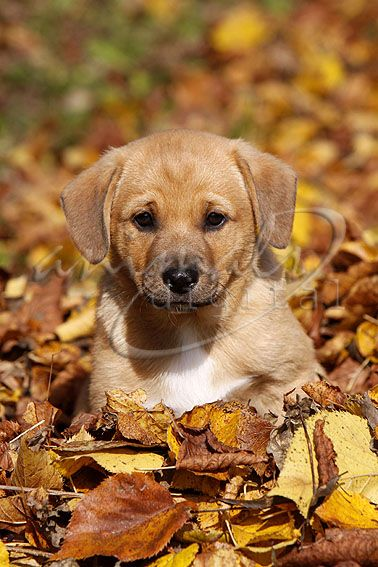 Dieser kleine welpe erinnert mich an meinen hund als er noch ein welpe war
