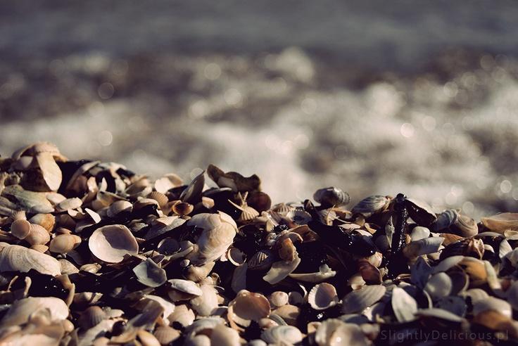 Muszle wyrzucone na brzeg po zimie - plaża w Brzeźnie - początek kwietnia 2012  #SlightlyDelicious