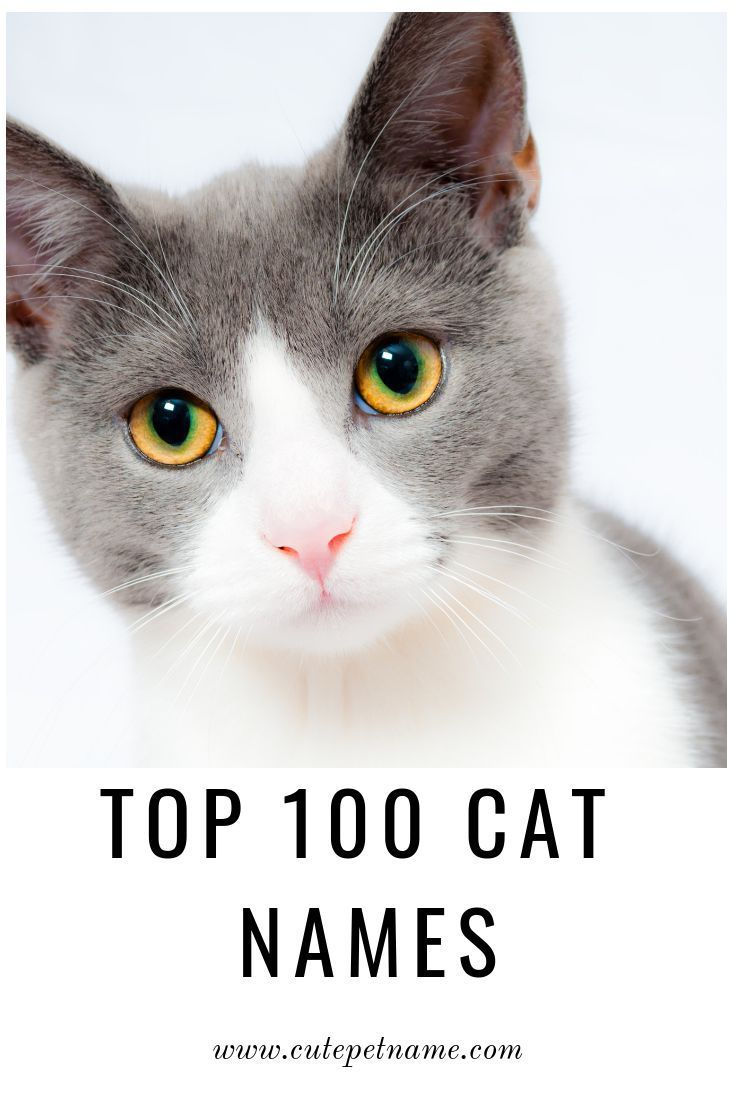 Are You Looking For A Cute And Unique Name For Your Cat Well You Ve Come To The Right Place Here You Ll Find Both A Cat Names Boy Cat Names Funny Cat