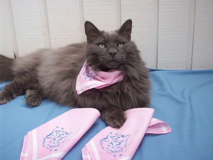 Liten vacker kisse med rosa bandana. De fina näsdukarna finns på www.katt4you.se