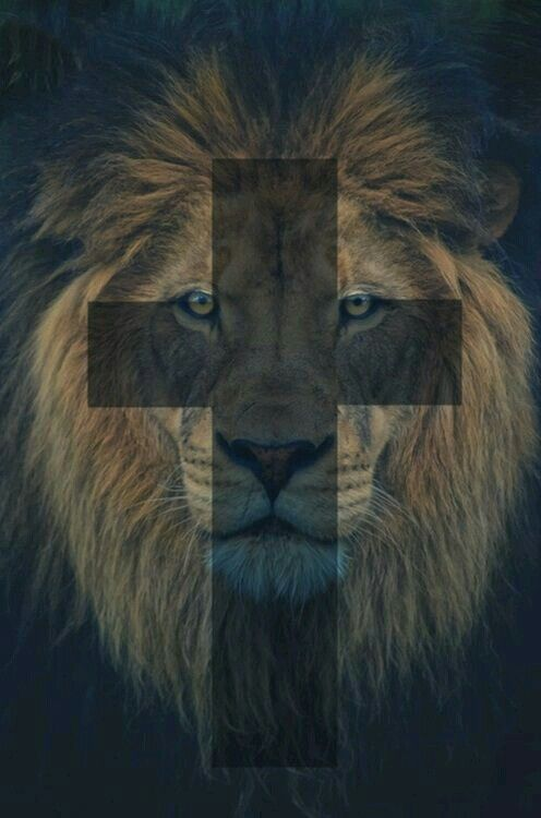 For my son the {leo}