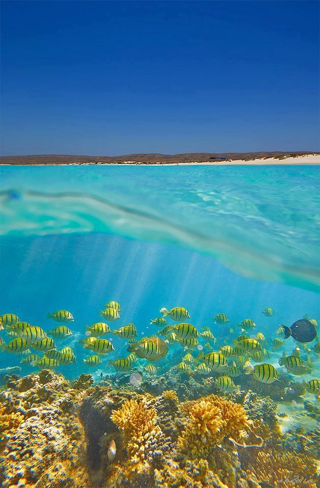 Beautiful Australia... Ningaloo Reef, 1200km north of Perth. Via Australia/Facebook