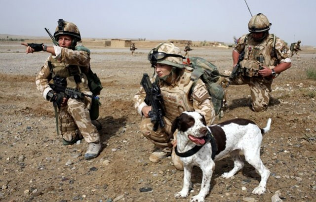 UK Government Kills Over 800 Army Dogs After Faithful Service.  Make it stop and bring them home.