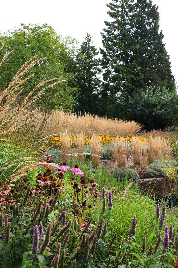11 best images about front yard ideas on pinterest for Modern ornamental grasses