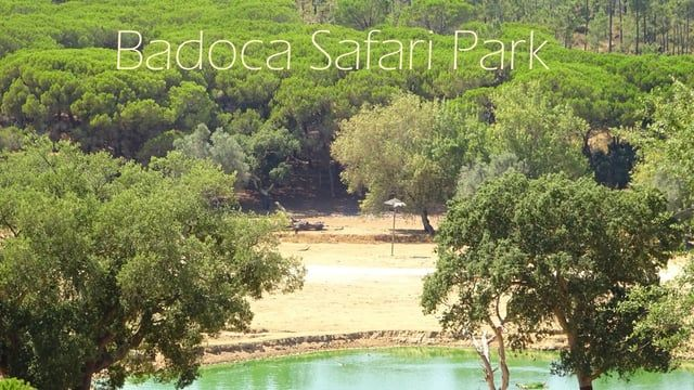 "Visit to Badoca Safari Park    Show some love and ""like it"" or ""share it""    joaotiagoliveira.com  facebook.com/joaotiagoliveira/  Shoted on  Xiaomi YI  Sony dsc - wx350"