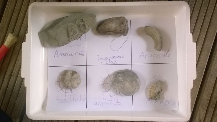 A fabulous fossil investigation map. Photographer: Catherine (BBOWT)