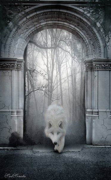 a ghost of the wolf