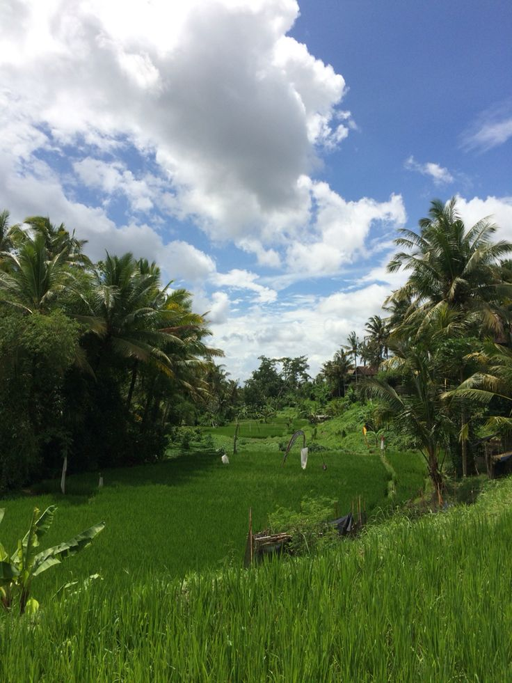 Paddy field - remind me of my father