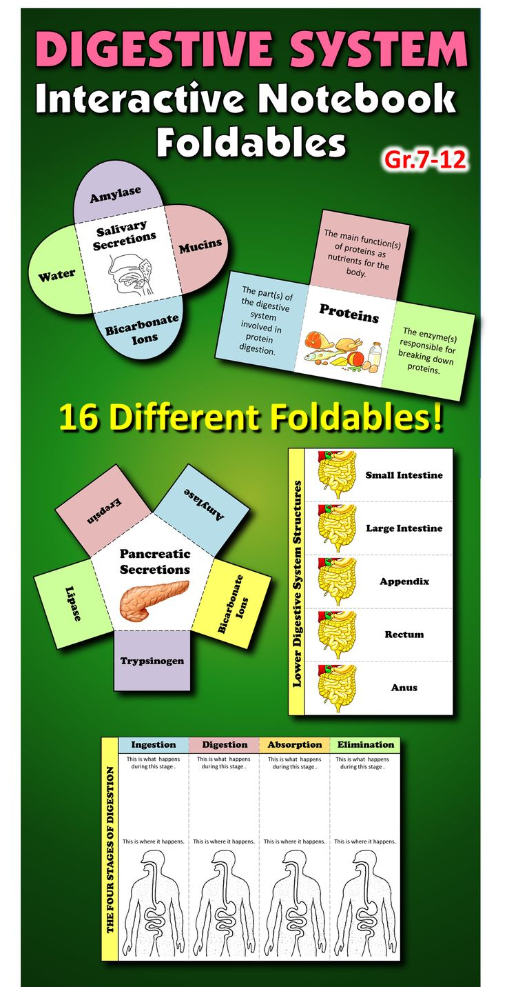 These 16 FOLDABLE GRAPHIC ORGANIZERS on the DIGESTIVE SYSTEM is designed to go with any INTERACTIVE NOTEBOOK on digestion.  This will get your students engaged, organized and having fun with their interactive notebooks.  They come in a color version as well as a black and white one.  Each foldable contains full instructions for cutting, folding and pasting as well as instructions on how to complete their foldable task.