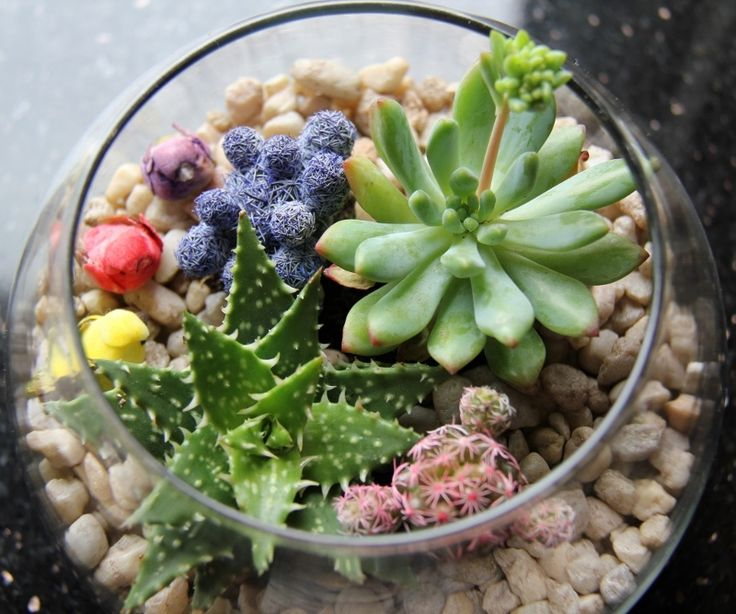 Colourful succulents and pebbles.