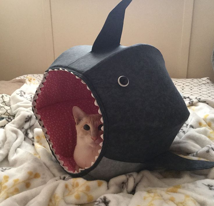 Diesel in his new Great White Shark cat ball by The Cat Ball at www.thecatball.com He loves it and so do I!!