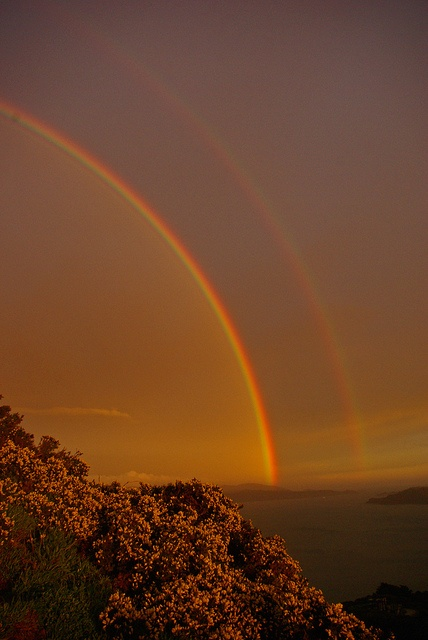 Double Rainbow (4) - Wellington Harbour (Taken from Newlands)