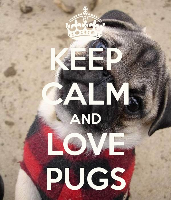 Pugs, pugs, pugs!! :D Chazz Pinette Knows this is my saying