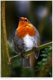 europian robyn  Image result for english birds on the red list conservation