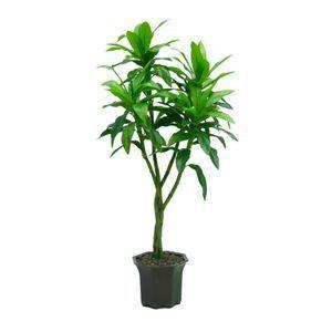 Les 25 meilleures id es concernant plante artificielle exterieur sur pinterest pneus en - Lucky bambou acheter ...