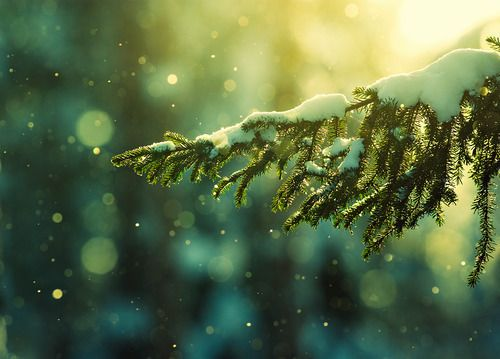 snow: Nature, Winter Wonderland, Beautiful, Snow, Christmas, Trees, Photography