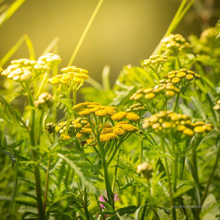 Die Pflanzenvielfalt am künstlich angelegten Doktorsee bei Rinteln ist enorm