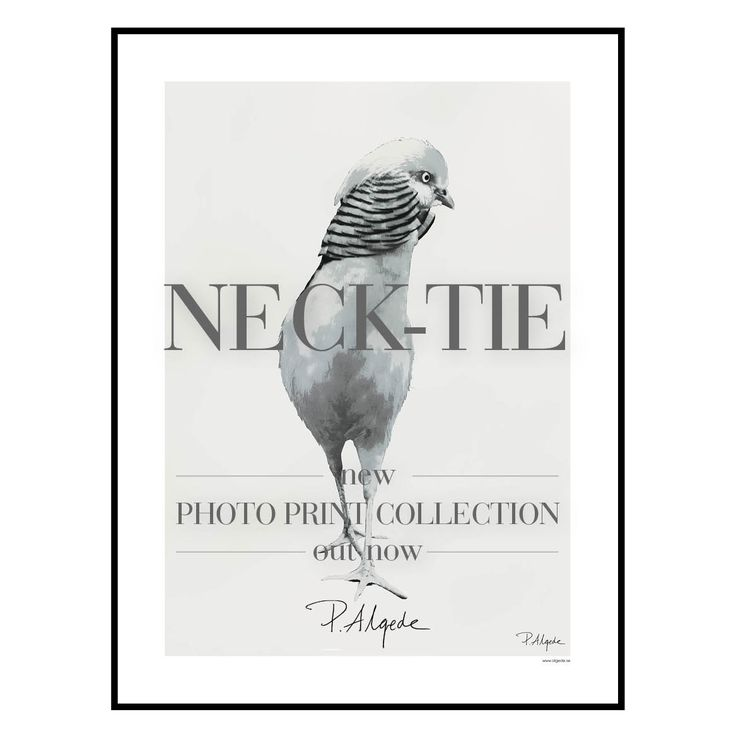 'Neck-Tie' print collection at houseofbeatniks.com