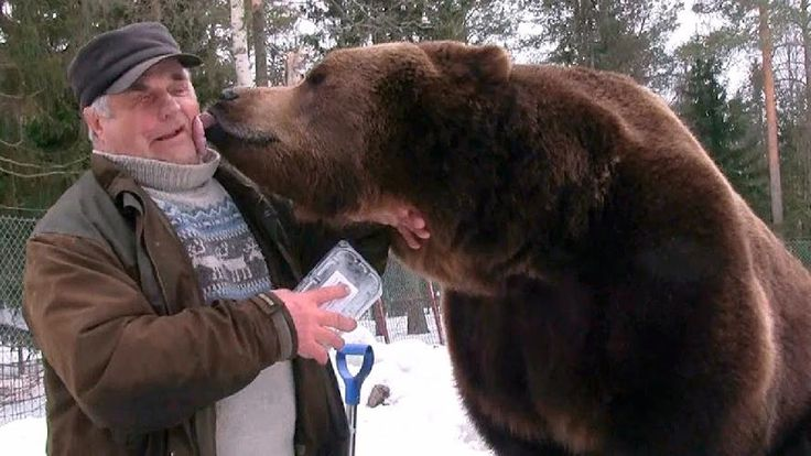 Meet Finland's Bear Man , Sulo Karjalainen . Sulo , along with his brother Jalo manages Kuusamo Large Carnivore Centre , which is home to more than 20 brown bears . Sulo took in the bear cubs after finishing a research project , and over the years they have developed a deep bond with the brown bears