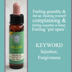 Bach Flower Remedy - Willow