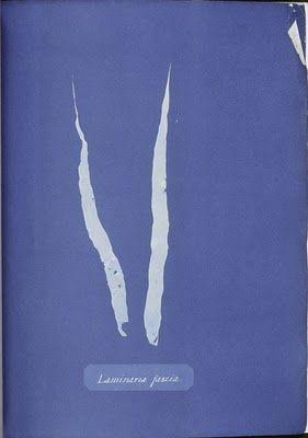 Cyanotype Anna Atkins