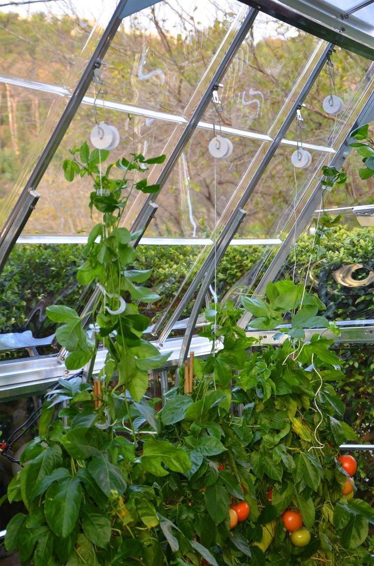 Easily hang your plants and vine crops Assures accurate height control of lengthy plants Quick and simple to operate